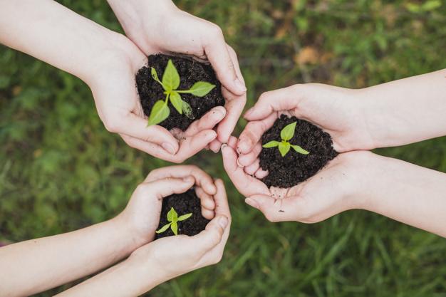concepto-eco-manos-sujetando-pequenas-plantas_23-2147807282